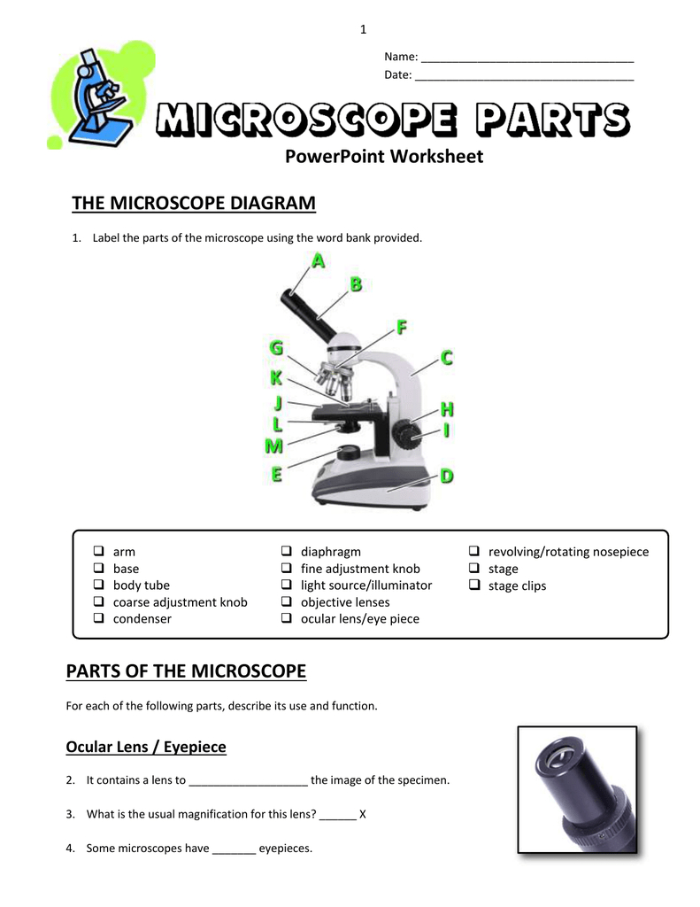 13  Microscope Parts  Powerpoint Worksheet Throughout Parts Of A Microscope Worksheet