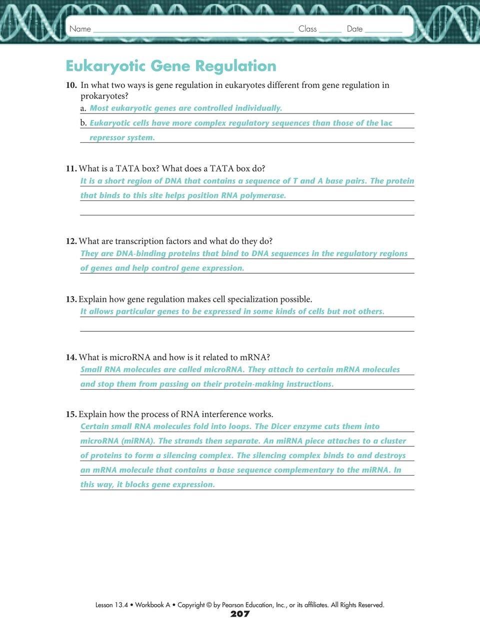 134 Gene Regulation And Expression  Pdf Together With Gene Regulation And Expression Worksheet Answers