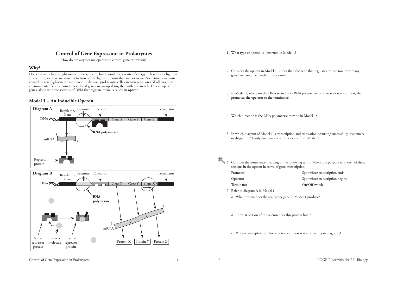 Act  Operon S  Saddlespace In Control Of Gene Expression In Prokaryotes Worksheet Answers
