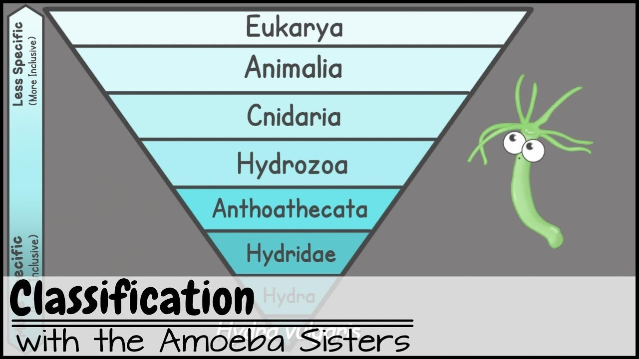 Amoeba Sisters Video Recap Biomolecules Worksheet Answers  Yooob With Regard To Amoeba Sisters Video Recap Biomolecules Worksheet Answers