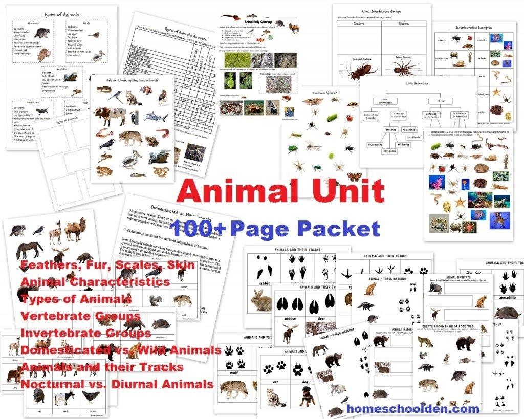 Animal Unit Vertebrateinvertebrate Animals Worksheet Packet 100 Pertaining To Animal Classification Worksheet