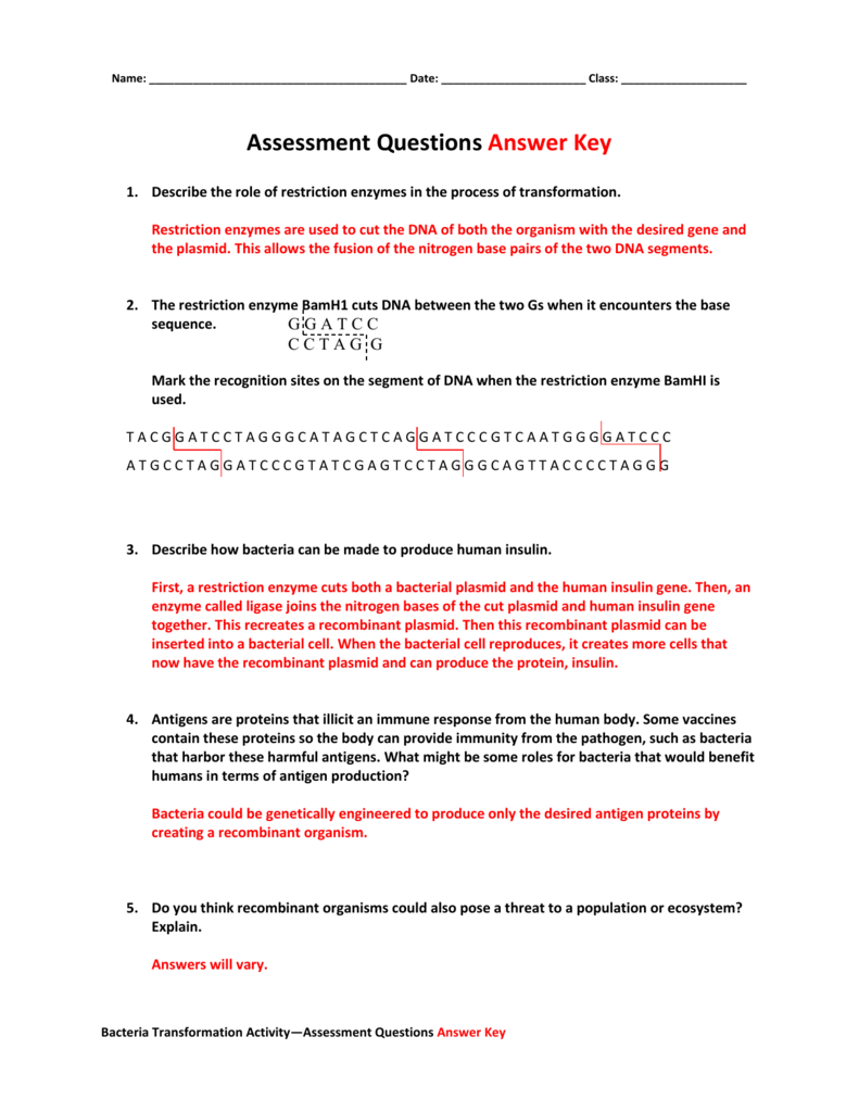 Assessment Questions Answer Key Regarding Restriction Enzyme Worksheet Answers