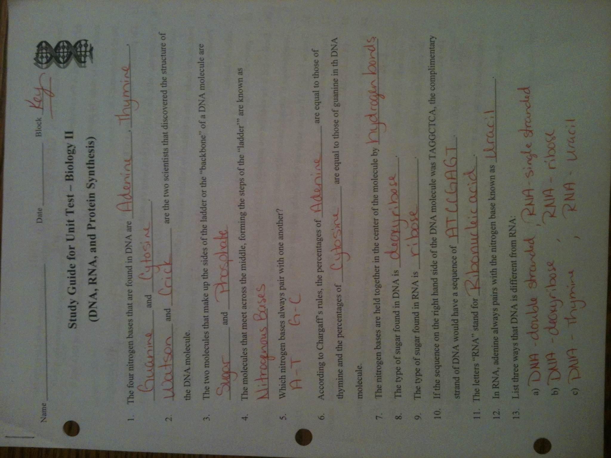 Awesome Collection Of Biology Mr Hoyle Dna Worksheet Images Regarding Dna Worksheet Answer Key Mr Hoyle
