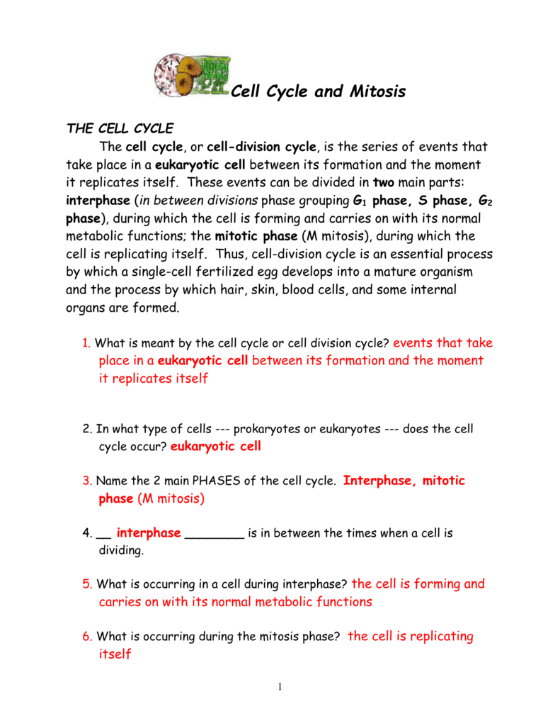 Cell Cycle And Mitosis Packet Along With Cell Cycle And Mitosis Worksheet