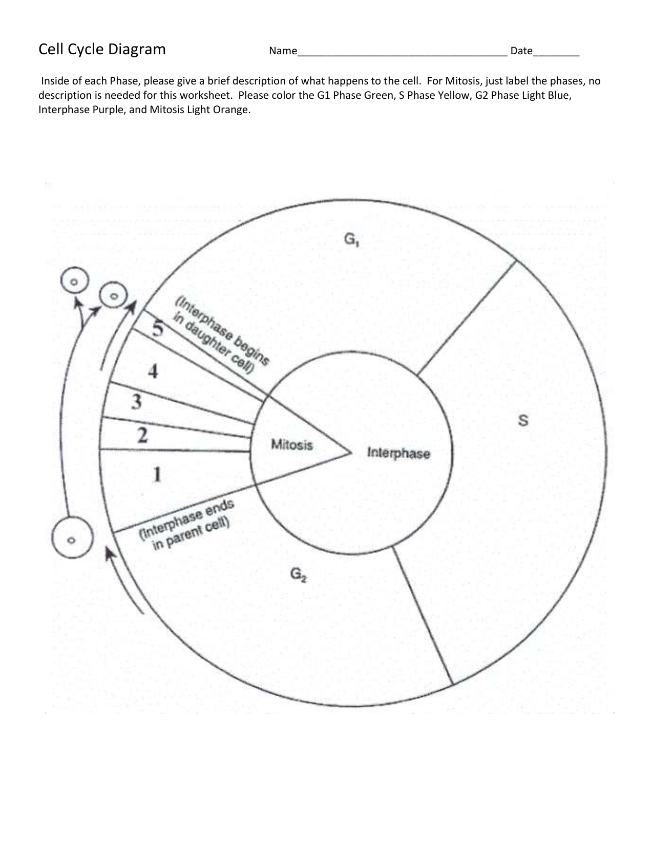Cell Cycle Drawing At Paintingvalley  Explore Collection Of And Cell Cycle Labeling Worksheet Answers