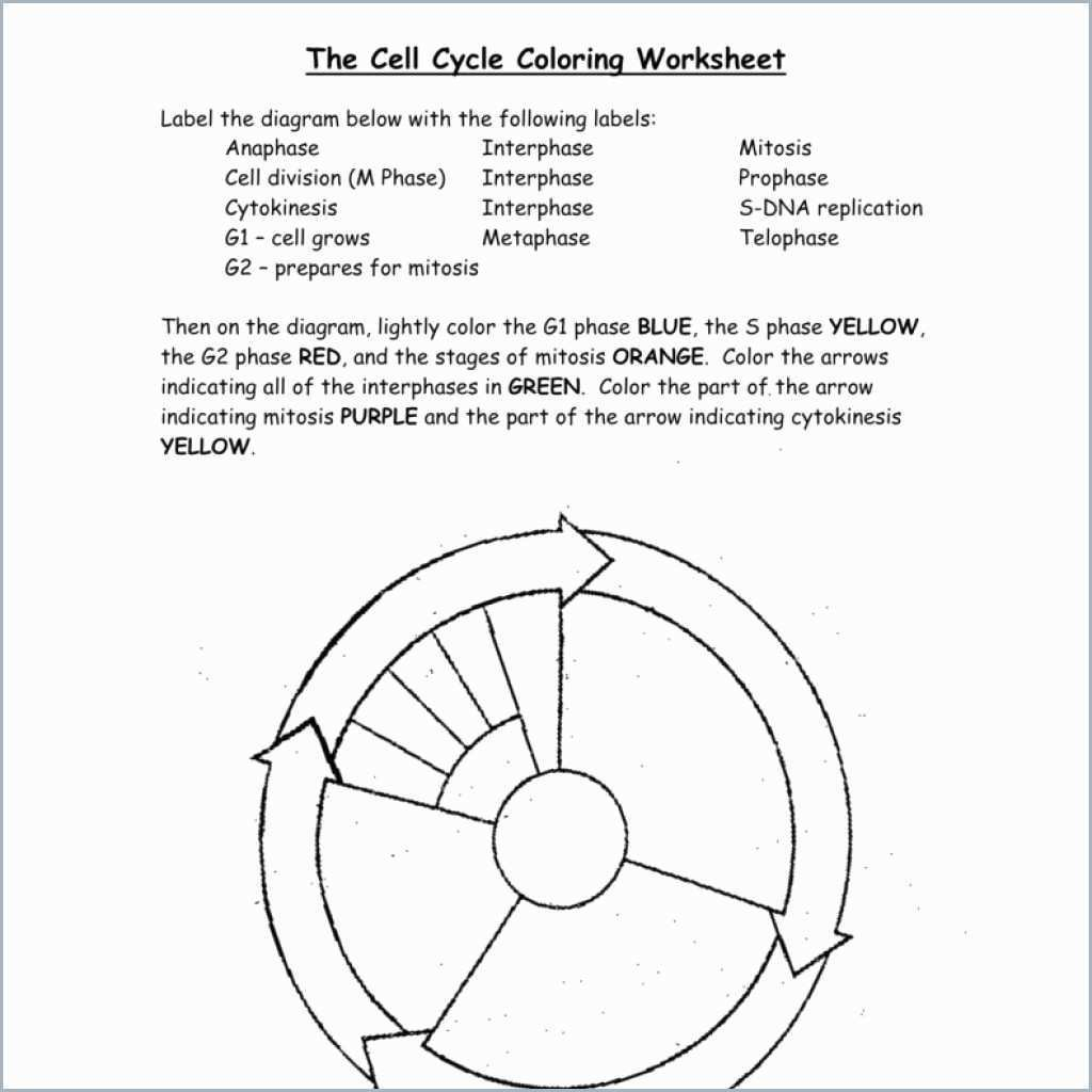 Cell Cycle Drawing Worksheet At Paintingvalley  Explore Inside The Cell Cycle Coloring Worksheet Questions Answers
