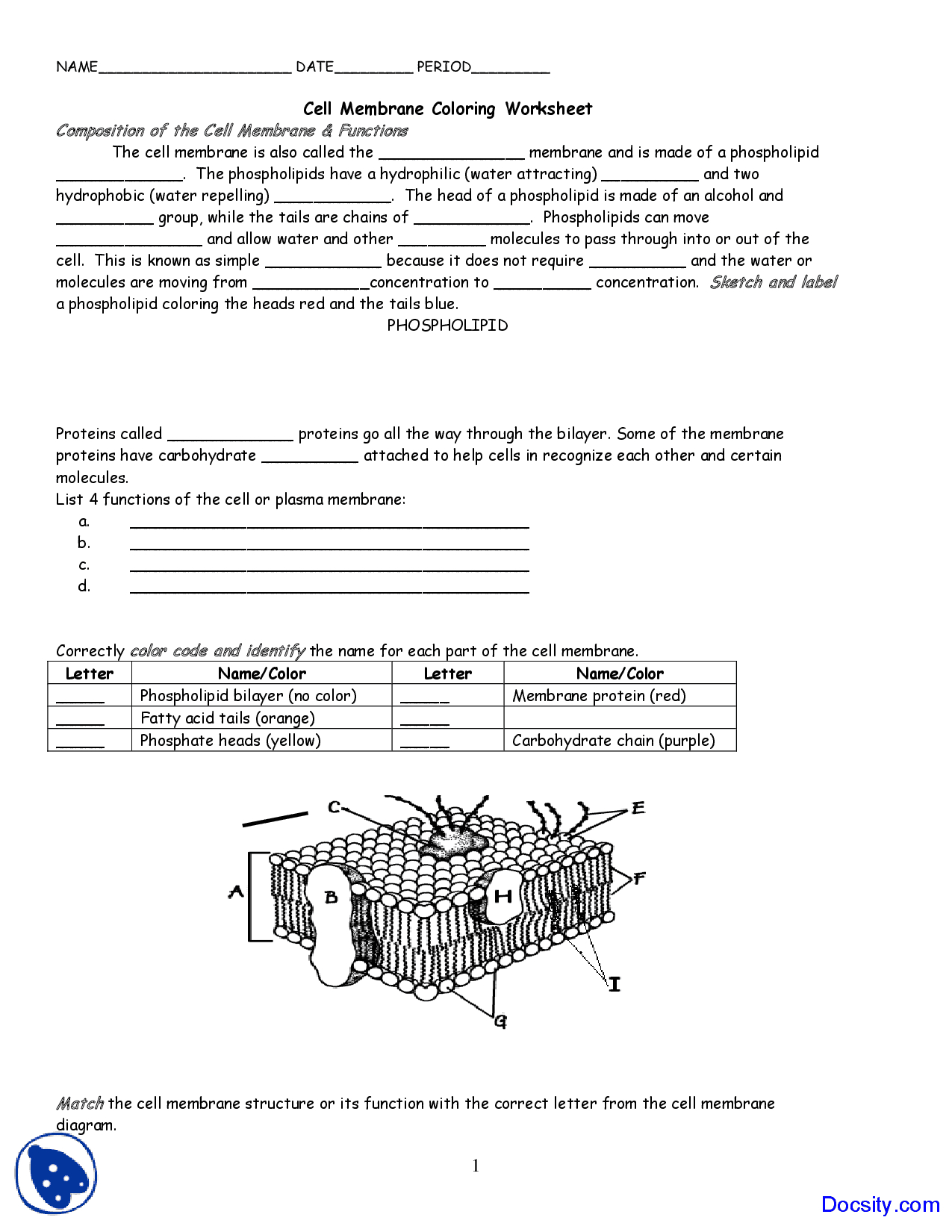 Cell Membrane Coloring  Application Of Biology  Assignment  Docsity And Cell Membrane Coloring Worksheet Answers