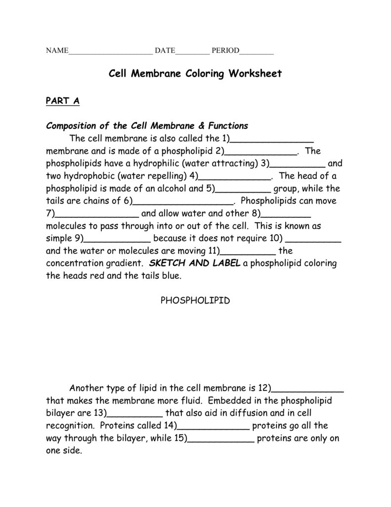 Cell Membrane Coloring For Cell Membrane Coloring Worksheet Answer Key