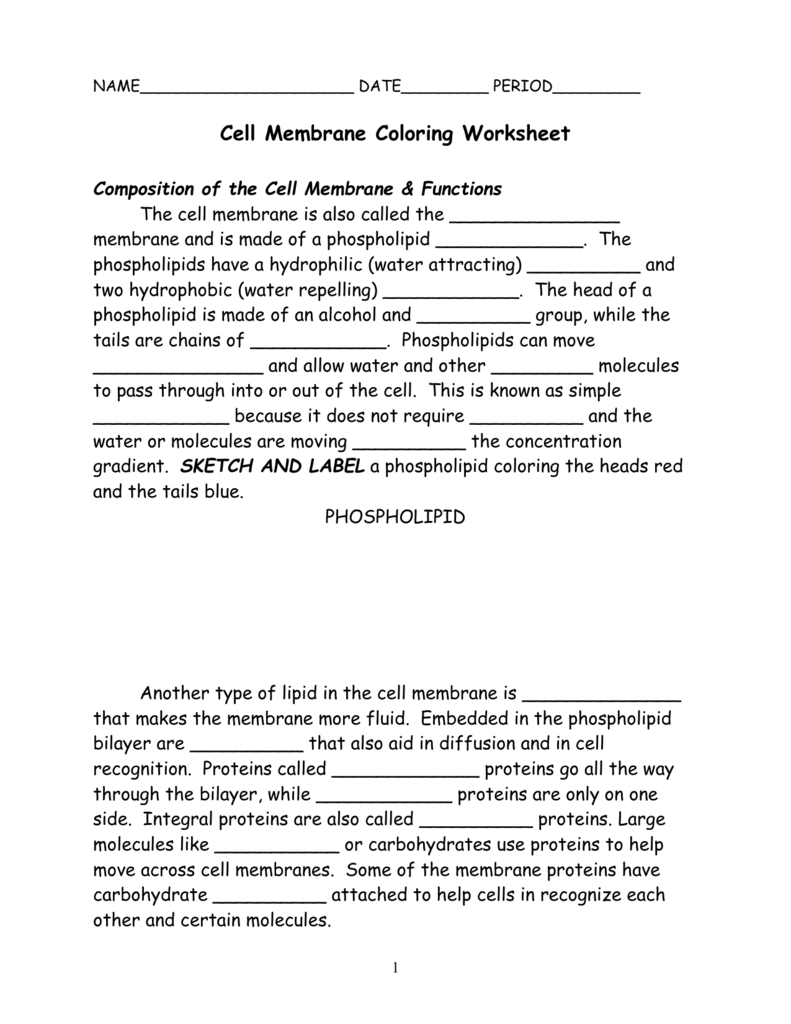 Cell Membrane Coloring Worksheet Composition Of The Cell With Cell Membrane Coloring Worksheet Answers
