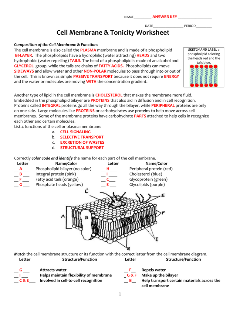 Cell Membrane  Tonicity Worksheet Also Cellular Transport Worksheet Section A Cell Membrane Structure Answer Key