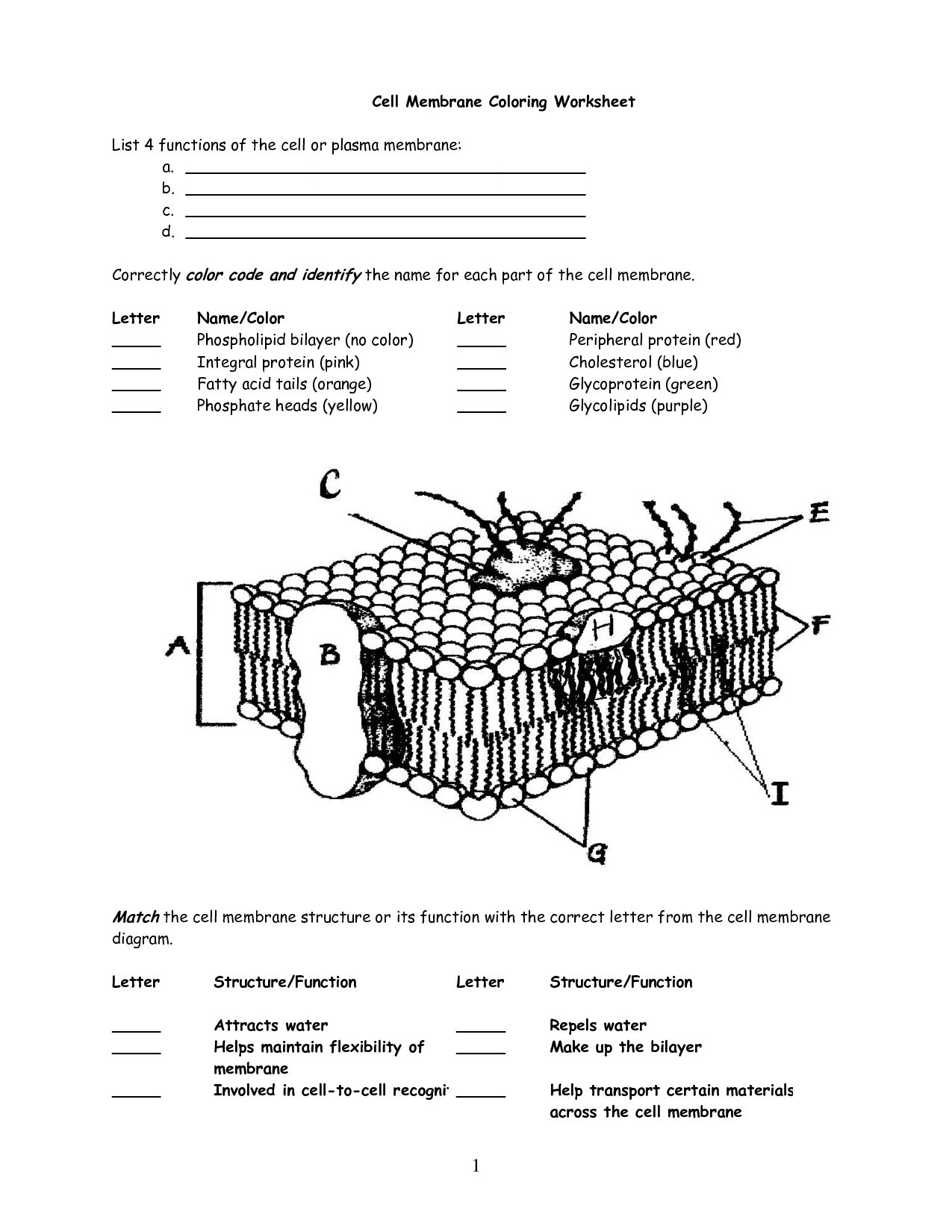Cell Membrane Worksheet Answers Cell Membrane Worksheet Google As Well As Cell Membrane Coloring Worksheet Answers