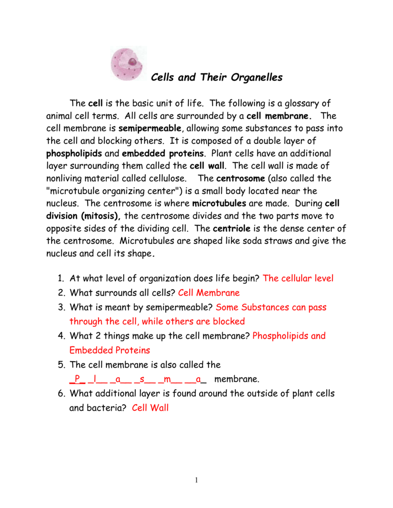 Cell Packet Answers With Cells And Their Organelles Worksheet