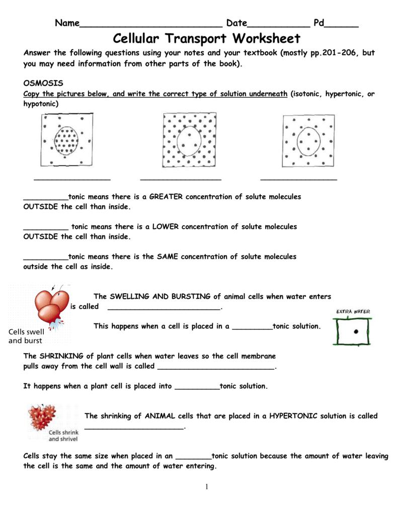 Cell Transport Worksheet Cellular Transport Together With Transport In Cells Worksheet