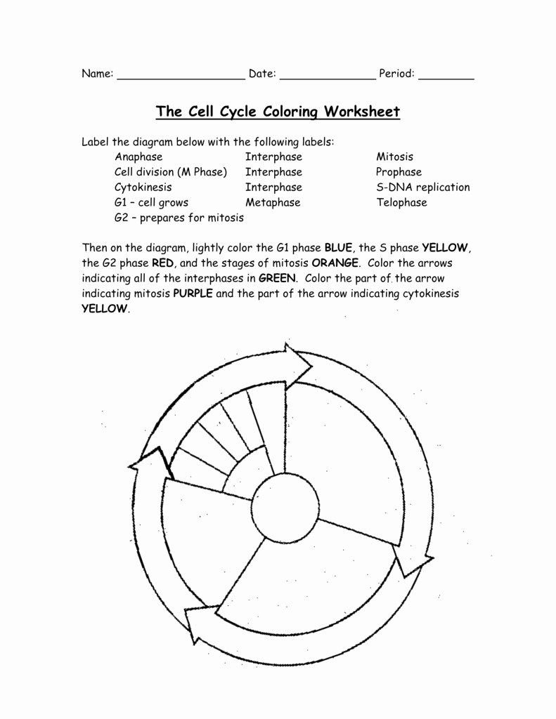 Cells Alive Cell Cycle Worksheet Answers  Briefencounters Intended For Cells Alive Cell Cycle Worksheet