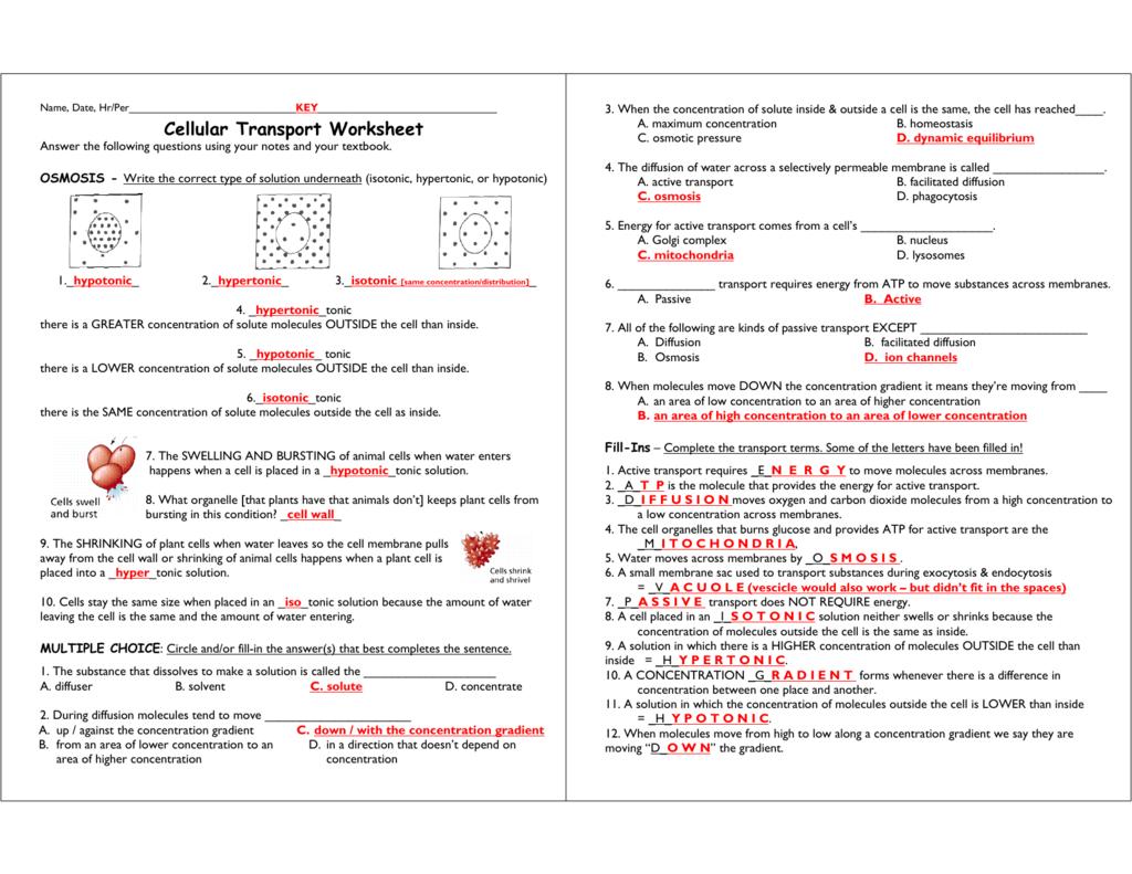 Cellular Transport Worksheet With Regard To Transport In Cells Worksheet