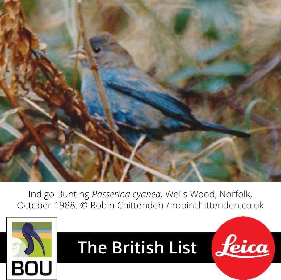 Changes To The British List (21 Dec 2018)   British Ornithologists ... With Regard To British Bird List Spreadsheet
