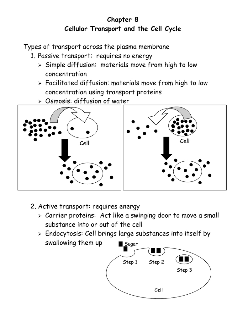 Chapter 8 Cellular Transport And The Cell Cycle And Cellular Transport And The Cell Cycle Worksheet