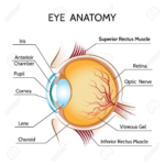 Chapter Notes  Light Class 8 Notes  Edurev As Well As The Eye And Vision Anatomy Worksheet Answers