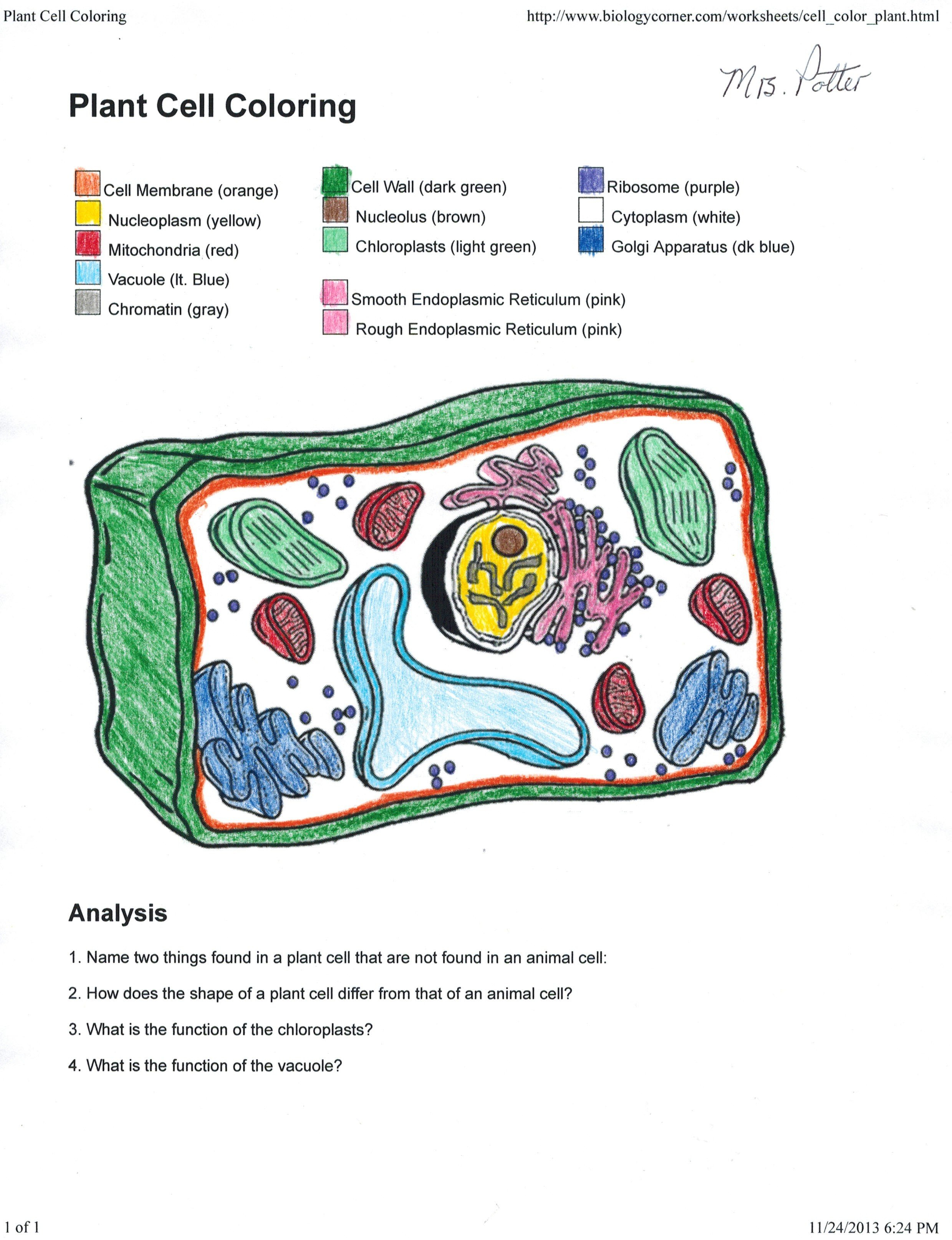 Collection Of Free Cellular Clipart Coloring Key Labeled Download Within Plant Cell Coloring Worksheet Key