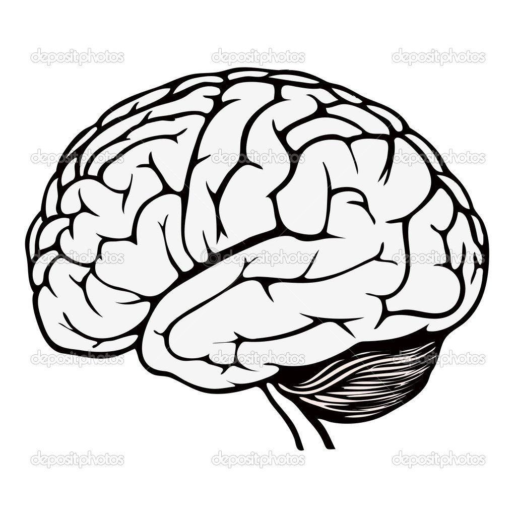 Coloring Ideas  Brainoring Pages Worksheet Page Best Of Throughout Brain Coloring Worksheet