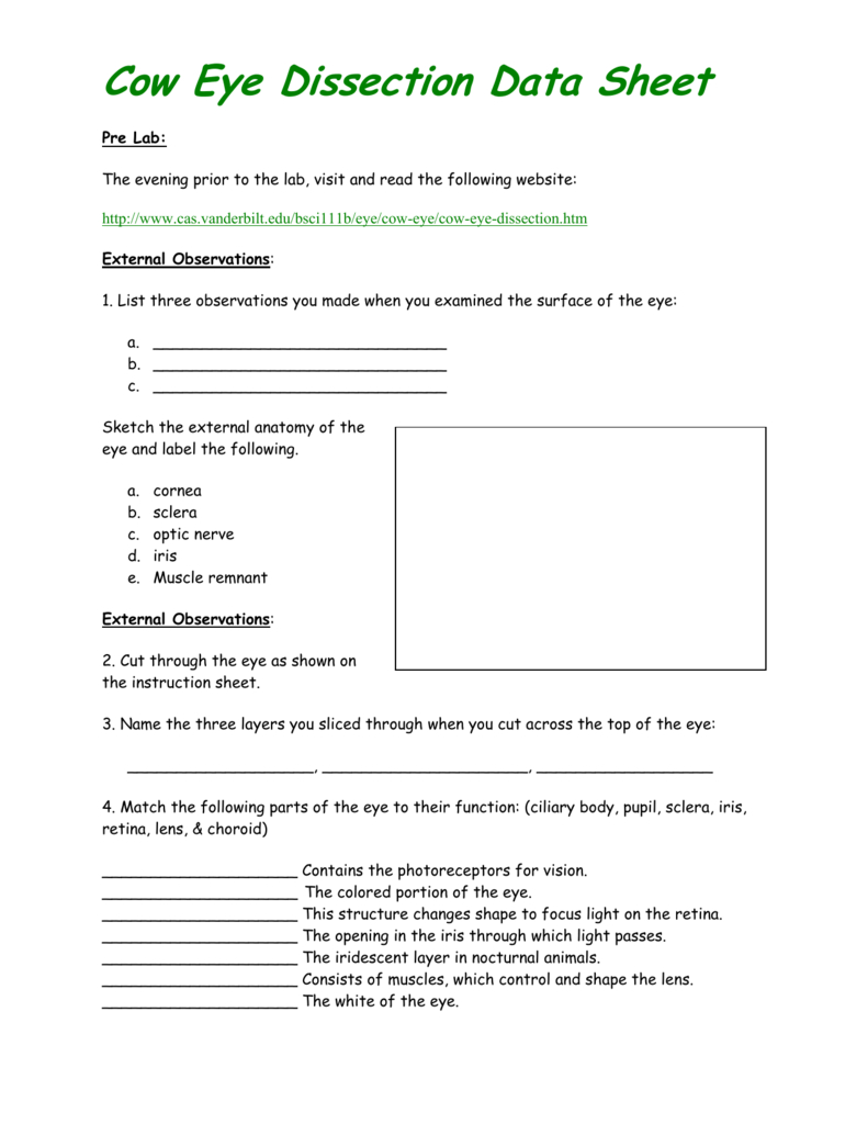 Cow Eye Dissection Data Sheet And Cow Eye Dissection Worksheet