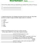 Cow Eye Dissection Worksheet Also The Eye And Vision Anatomy Worksheet Answers