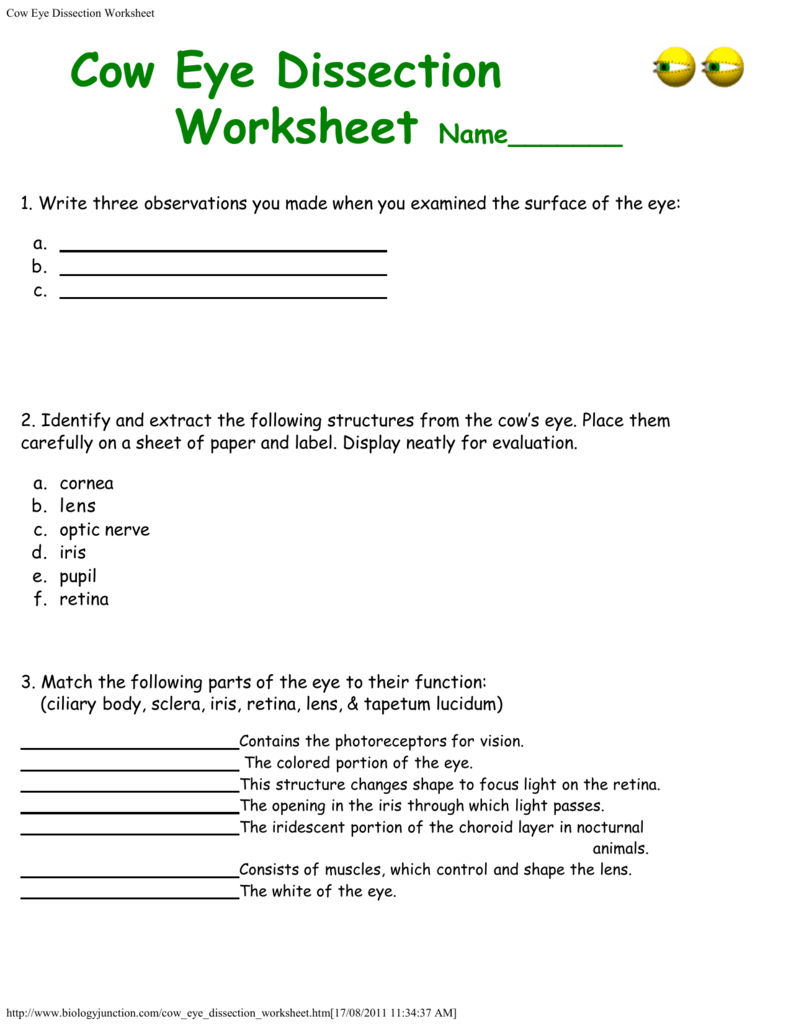 Cow Eye Dissection Worksheet In Cow Eye Dissection Worksheet