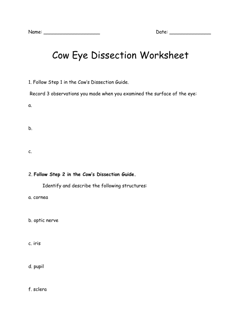 Cow Eye Dissection Worksheet Inside Cow Eye Dissection Worksheet
