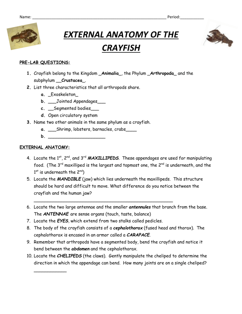 Crayfish Dissection Answers Also Crayfish Dissection Worksheet
