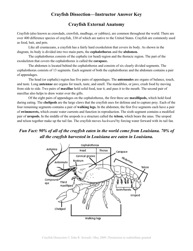 Crayfish Dissection—Instructor Answer Key Crayfish External Anatomy For Crayfish Dissection Worksheet