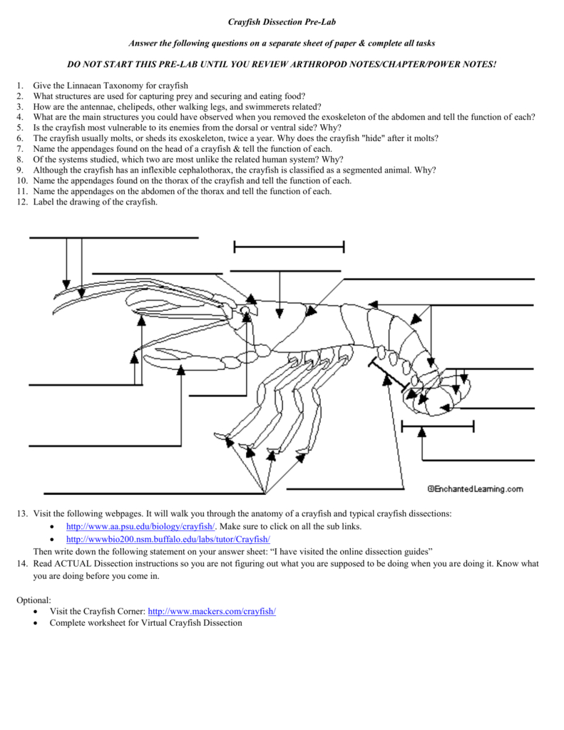 Crayfish Dissection Prelab With Crayfish Dissection Worksheet