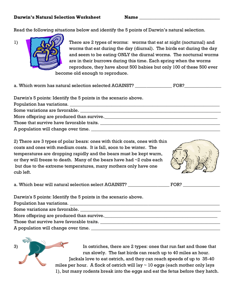 Darwin's Natural Selection Worksheet Regarding Evolution By Natural Selection Worksheet