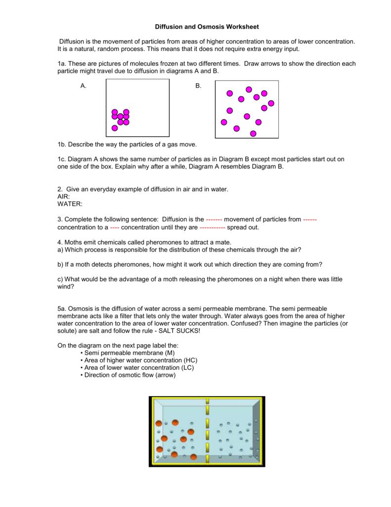 Diffusion And Osmosis Worksheet Inside Diffusion And Osmosis Worksheet Answers