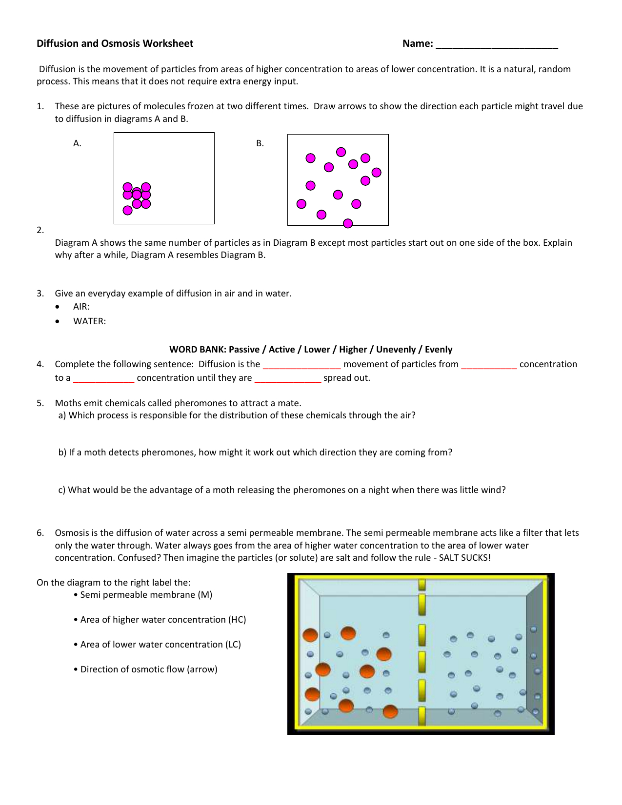 Diffusion And Osmosis Worksheet Within Diffusion And Osmosis Worksheet Answers