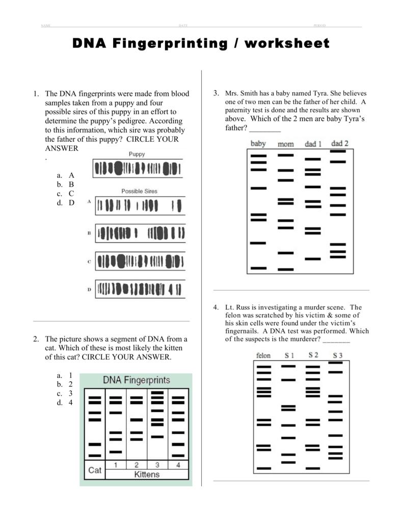 Dna Fingerprinting  Worksheet Along With Dna Fingerprinting And Paternity Worksheet Answer Key