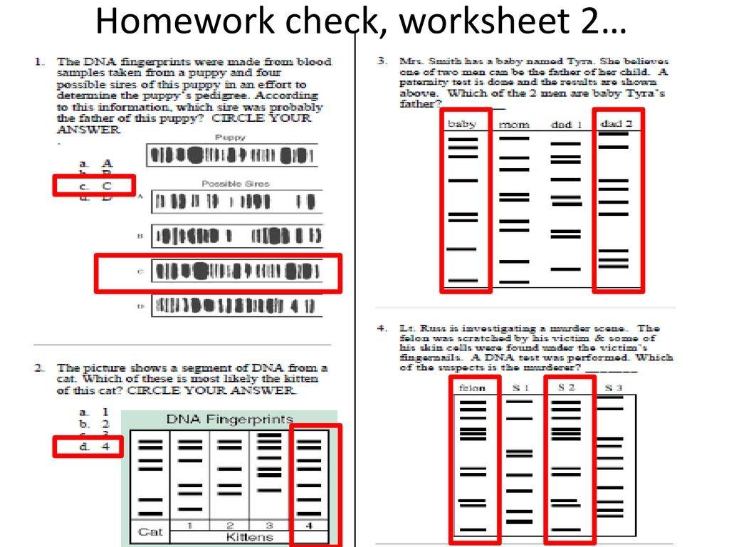 Dna Fingerprinting Worksheet Answer Key — excelguider.com