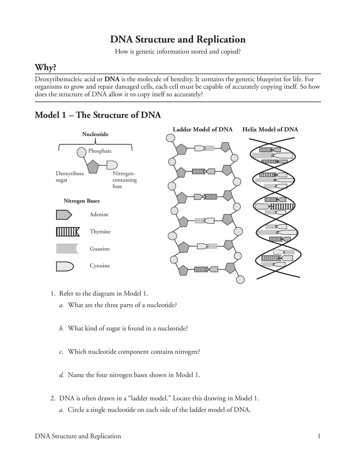 Dna Structure And Replication Worksheet Answer Key ...