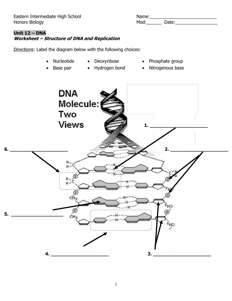 Dna Structure And Replication Worksheet Throughout Dna Structure And Replication Worksheet Answer Key