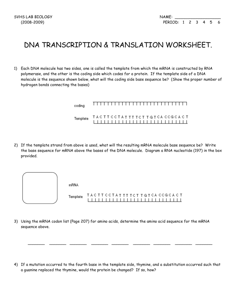 Transcription And Translation Worksheet Answer Key Biology ...