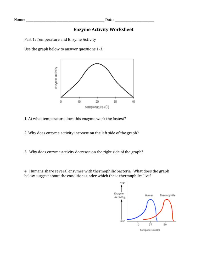 Enzyme Activity Worksheet Regarding Enzyme Graphing Worksheet