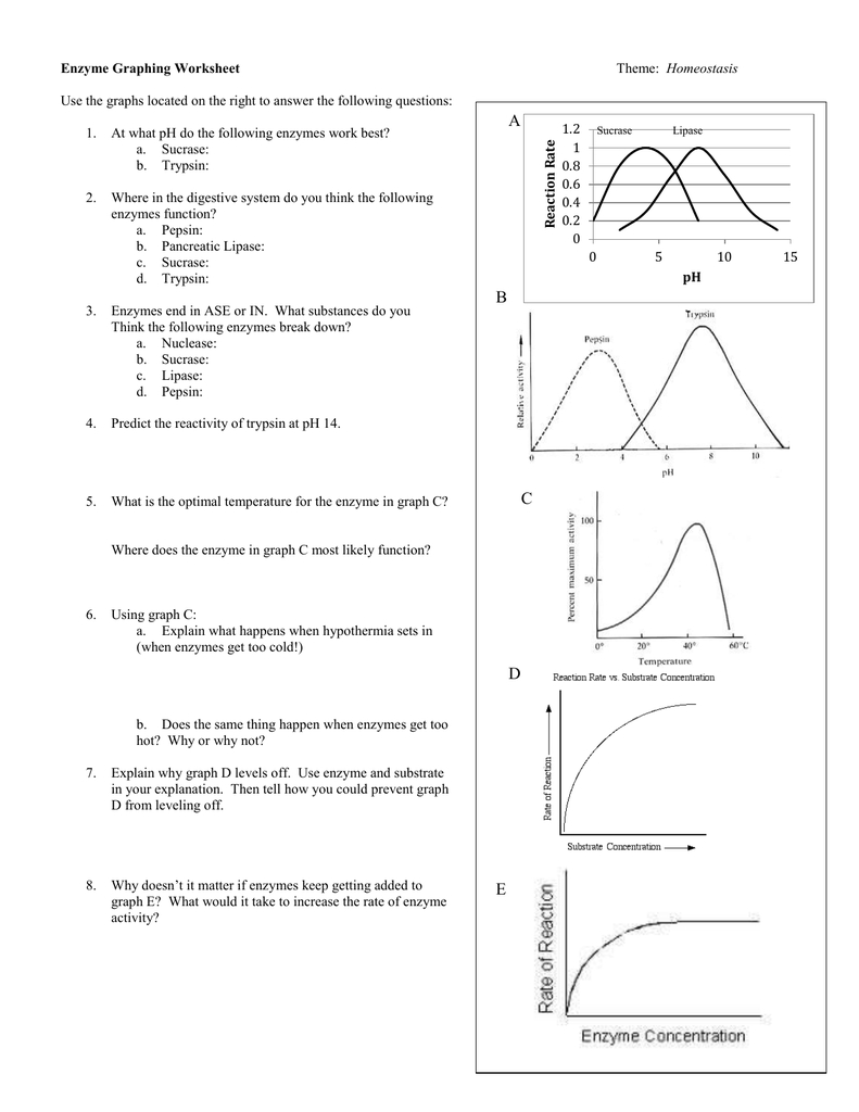 Enzyme Graphing Worksheet Inside Enzyme Graphing Worksheet