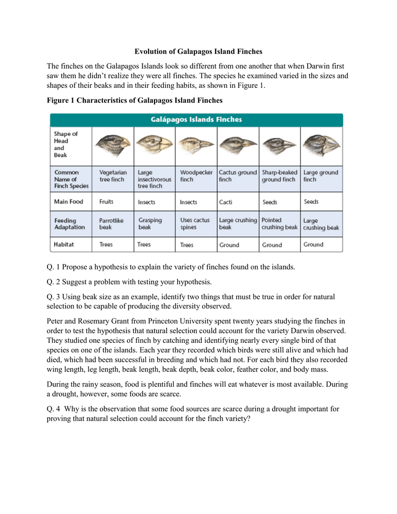 Evolution Of Galapagos Island Finches The Finches On The With Galapagos Island Finches Worksheet