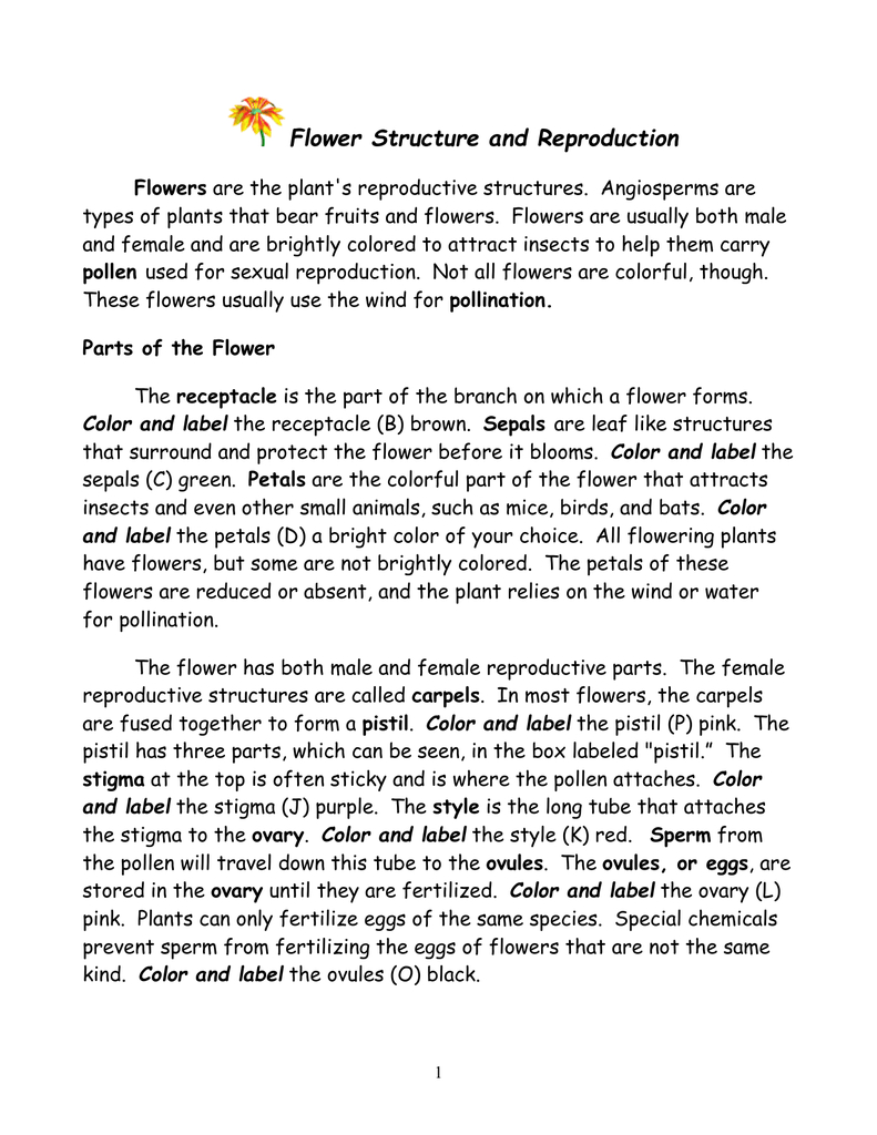 Flower Structure And Reproduction As Well As Flower Structure And Reproduction Worksheet Answers