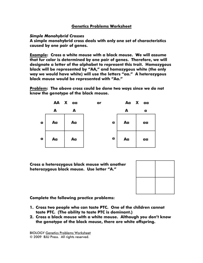Genetics Problems Worksheet Simple Monohybrid Crosses A Simple Throughout Monohybrid Cross Problems 2 Worksheet With Answers