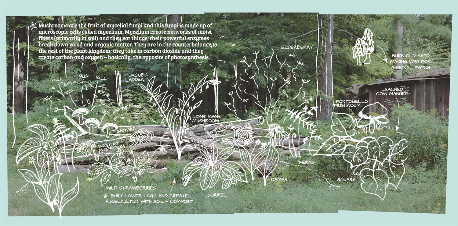 How To Grow Mushrooms  Design A Forest Garden  Showit Blog As Well As Growing Media For Landscape Plants Worksheet