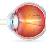 Human Eyes Intended For The Eye And Vision Anatomy Worksheet Answers