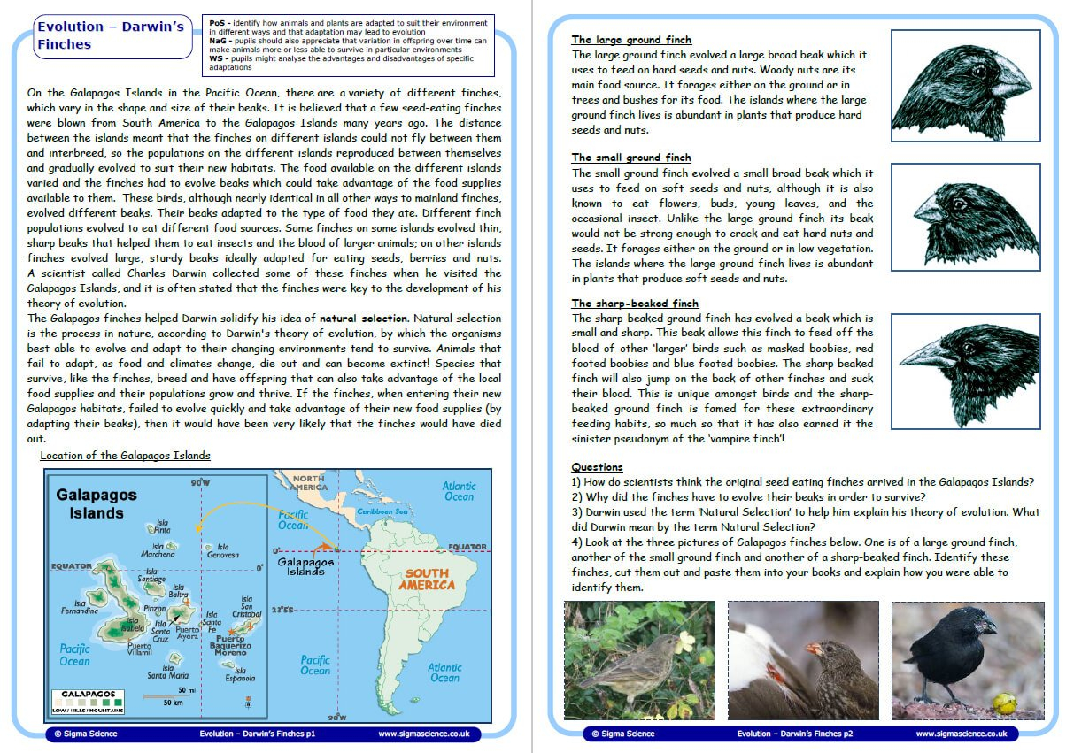 Introduce Evolution With Charles Darwin's Study Of Finches On The Inside Galapagos Island Finches Worksheet