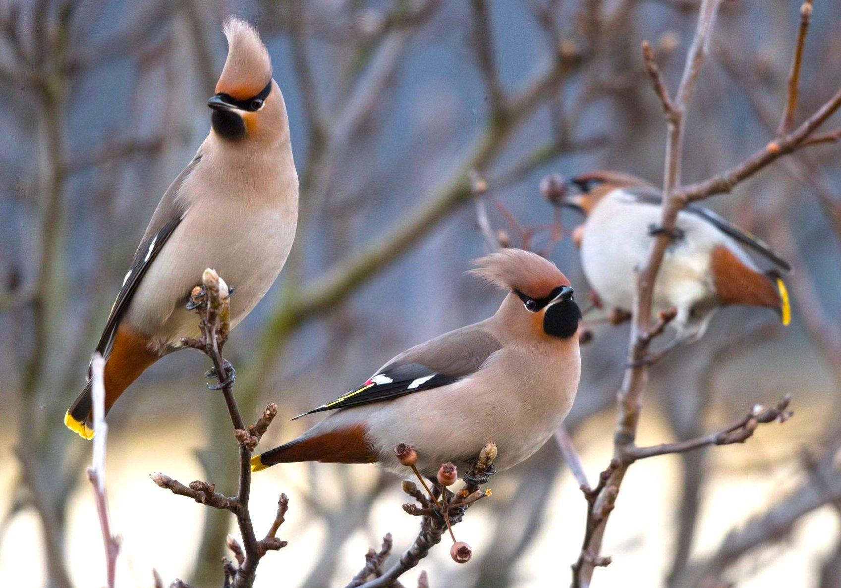 London Natural History Society   London Bird Club Together With British Bird List Spreadsheet