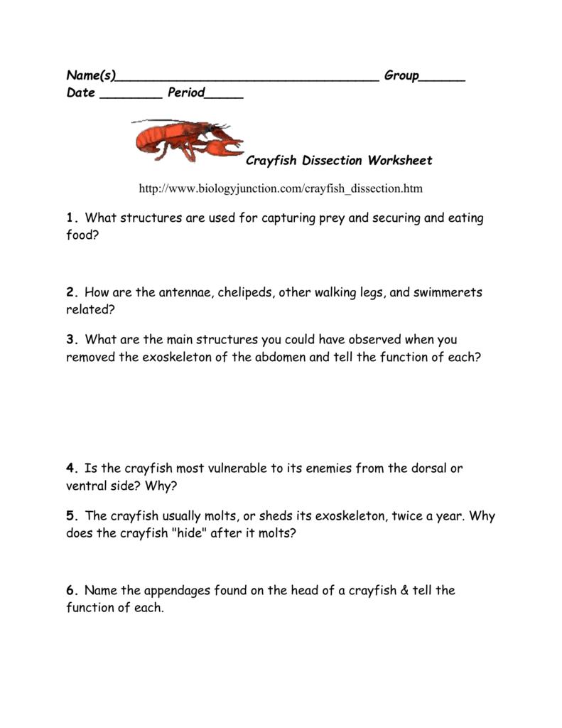 Makeup Crayfish Lab Also Crayfish Dissection Worksheet