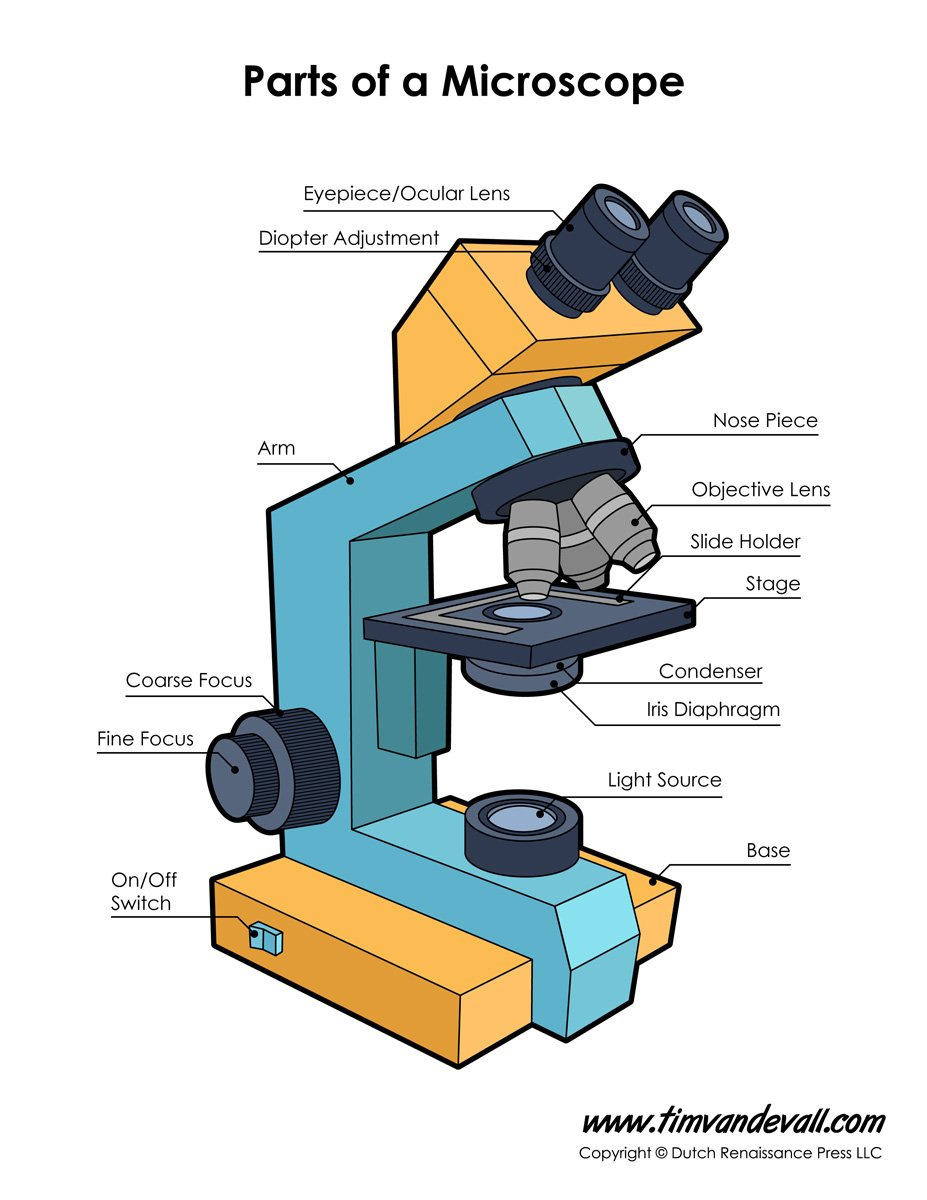 Microscope Diagram Labeled Unlabeled And Blank  Parts Of A Microscope Or Microscope Labeling Worksheet